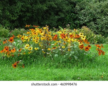 There are yellow flowers (rudbekia) and green grass