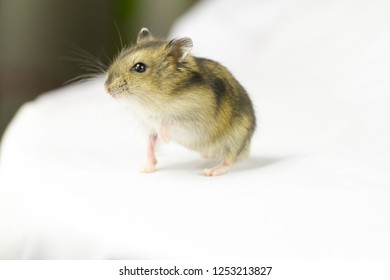 There's a cute hamster in the white background.