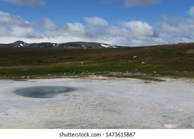 Thermal mineral bed at Hveravellir Nature Reserve in Iceland with grazing sheep behind