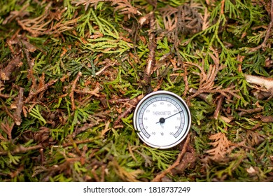 Thermometer in the compost pile showing high temperature of the decomposing material