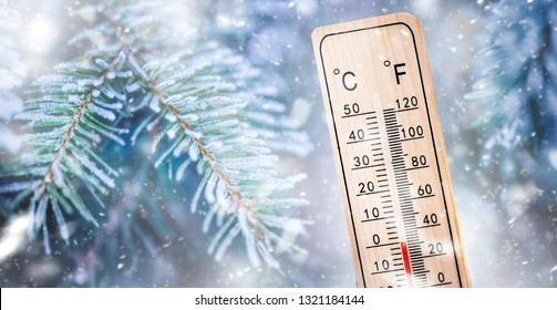 Thermometer or meteorology degree indicator  in winter near frozen pine twig shows low temperatures.