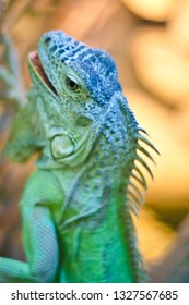 These are beautiful animals. Beautiful wild animal, creepy, spotted and bright in patterns, lizard, iguana, its muzzle from close range, on a branch and a tree trunk.