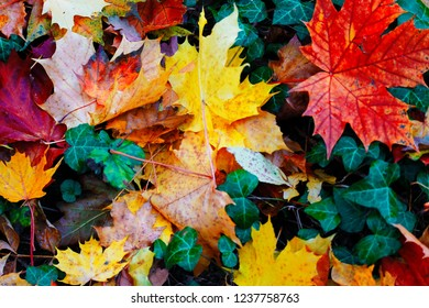 these colorful leaves
