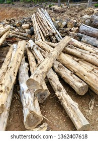 These logs are stacked and ready for log home building. The building industry offers many options for log homes in North Carolina.
