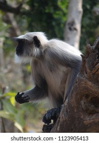 These phtograph are taken in Gujrat (India) on  1 to 10  January 2018 ki, Monkeys pics are from Girnarji  and temple wali pics from tarangaji  and beach pics are from   somnathe