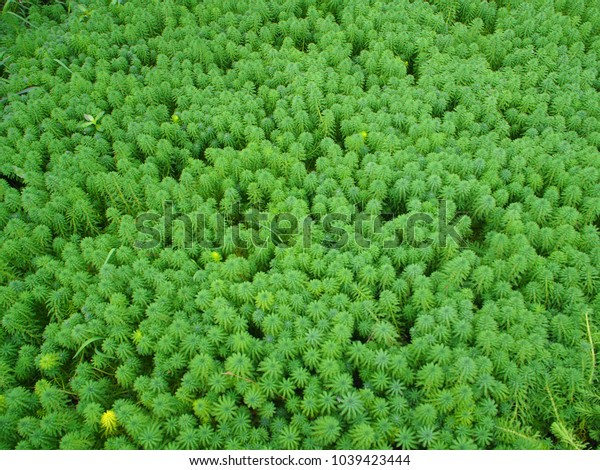These are some of the green plants in the lake in summer.