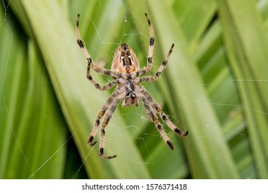 These spiders normally do not move if you do not disturb them, you are still waiting for your prey to fall