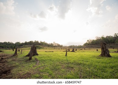 These stumps are caused by dams.