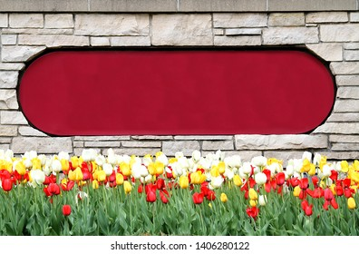 These tulips are blooming in front of a brick wall with copy space for your message. The tulips are red, yellow, and white and have nice green stems and leaves. Add your message to the sign space.