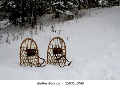 These are vintage bear paw snow shoes sticking out of the snow in a winter scene.  There are green pine trees in the background.