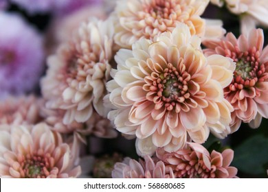 These are white and orange flowers called Chrysanthemum or Florist's Mun or mums flowers. And a sacred flower of China.