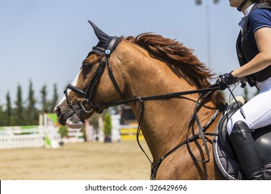 Thessloniki, Greece, June 14, 2015: Close up of the horse during competition matches riding round obstacles