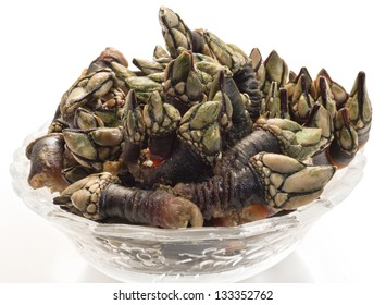 they are goose barnacles, handgathered from rocky outcroppings off the Galician coast; they taste like the essence of the sea