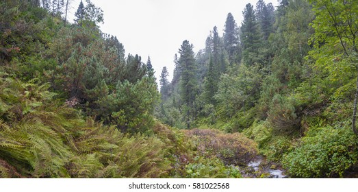 Thick autumn forest in the mountains of Khamar-Daban. Forest after rain.