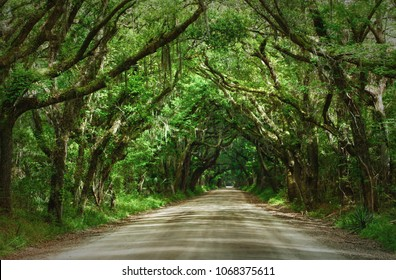 Thick canopy of oak trees creating a tunnel over Botany Bay Road in Edisto, South Carolina.