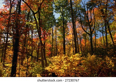 thick forest in the fall