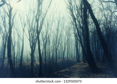 Thick forest with path in mysterious fog