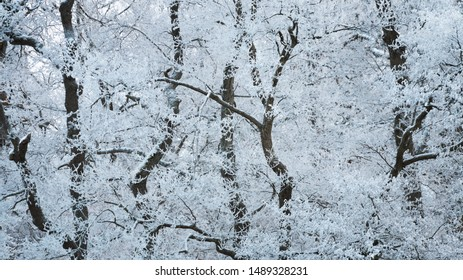 Thick forest with trees covered in rime frost