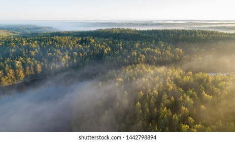 Thick glowing fog among spruce forest down in the valley. Wonderful nature background. Aerial viewpoint. Beautiful Finnish nature.