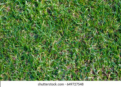 Buffalo Grass Images Stock Photos Vectors Shutterstock