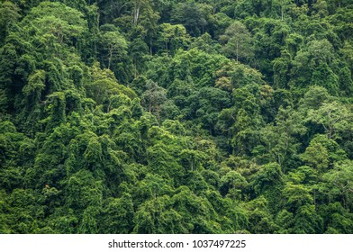 Thick, impenetrable jungle canopy in south Asia