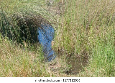 THICK LONG GRASS ARCHING OVER WATER