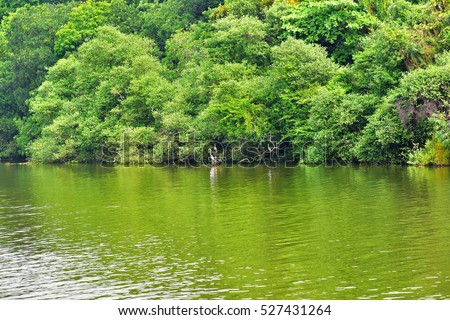 tidal forest in india