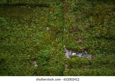 Thick moss on the wall
