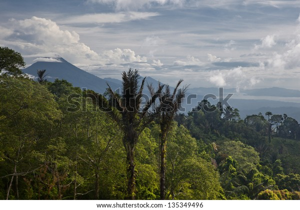 A thick rainforest in north Sulawesi, Indonesia, stretches into the distance towards volcanoes.