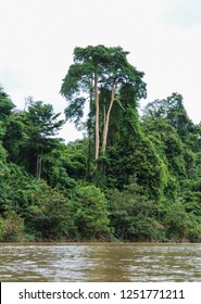 Thick tropical forest vegetation and trees seen during a boat tour on the Tembeling River in Pahang jungle, Taman Negara National Park, Malaysia, Asia