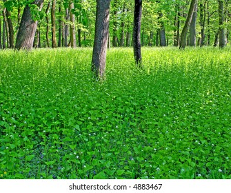 Thicket of the forest. Green background.