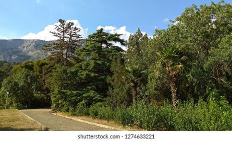 Thicket of trees crowns, palm trees, conifers & bushes along an asphalt pavement in Foros dilapidated park part with a beautiful mountain summit in a slight haze against the blue sky with some clouds.