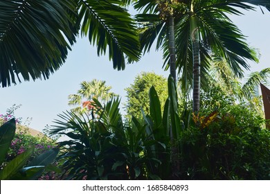 thickets of rainforest with palm trees