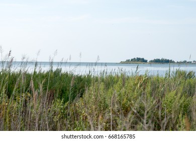 Thickets of reeds and Chesapeake Bay on Maryland Eastern Shore near Rock Hall, MD