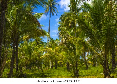 thickets of tropical vegetation on an island in the Andaman sea in Thailand
