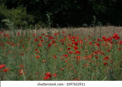 Thiepval Somme battlefields WW1 France