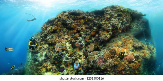 A thila in Maldives - combo art of underwater images reproducing seascape (thila - underwater island)