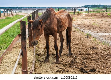 thin big horse