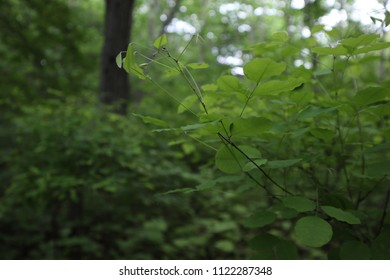 Thin branch with green leaves, shallow depth of field. Forest nature, summer. Depths of the dark forest.