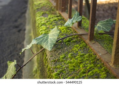 Thin branches with leaves on the background of rusty iron lattice and green moss