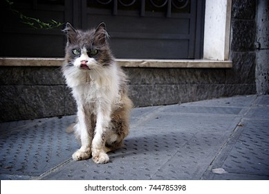 Ugly Cat Images Stock Photos Amp Vectors Shutterstock
