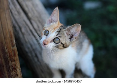 Thin homeless kitten. Young kitty with half orange and half brown fur on face. Funny color on kitten face. Young cat sitting on log on the street