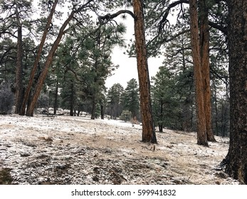 Thin layer of snow blanket forest floor.