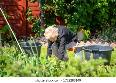 Thin old lady with curly grey blond hair sits on a garden stool and bends over to work on her garden. Her spine is hunched with kyphosis. She wears smart clothes with black cardigan.