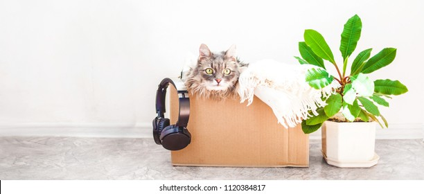 Things to move, a cat in a box, a flower in a pot jn a white background Garage sale and moving concept Copy space Banner
