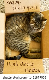 "Think Outside Box. Humorous image. A tabby cat inside a box that says ""Think Outside the Box""."