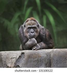 Thinking monkey.