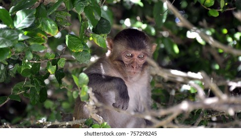 thinking monkey in nature: evalution of the man