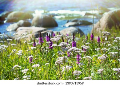 The thinnest and purest essence of summer - flowering grasses, blooming meadows. Favourite season. Valeriana and the sea