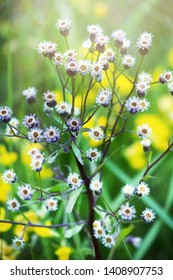 The thinnest and purest essence of summer - flowering grasses, blooming meadows. Favourite season. Wild Astra has faded